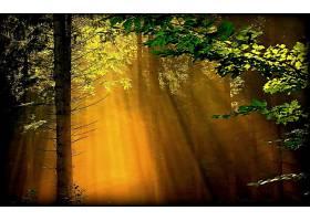 阳光,太阳,阳光,森林,壁纸,图片