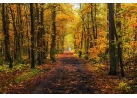 小路,自然,森林,树,秋天,泥土,路,壁纸,图片