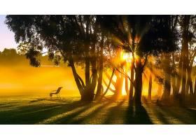 阳光,工作台,树,公园,壁纸,图片