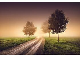 雾,自然,树,路,草,壁纸,图片
