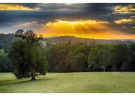 阳光,日落,树,风景,森林,领域,壁纸,图片