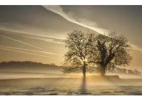 雾,自然,树,阳光,日出,壁纸,图片