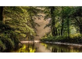 阳光,树,森林,水,绿色的,反射,壁纸,图片
