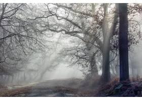雾,自然,树,阳光,泥土,路,壁纸,图片