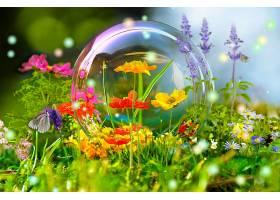 地球,花,花,彩色,富有色彩的,蝴蝶,气泡,操纵,壁纸,图片