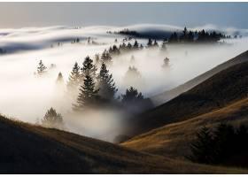 雾,自然,树,风景,壁纸,图片