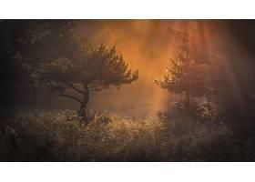 阳光,森林,早晨,草,自然,壁纸,图片