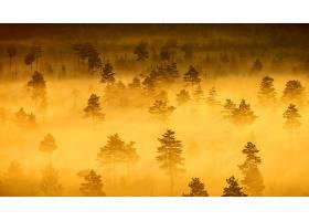 雾,自然,树,风景,天线,壁纸,图片