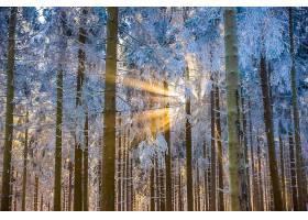 阳光,森林,树,冬天的,自然,壁纸,图片
