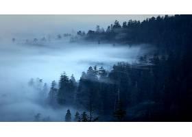 雾,自然,森林,壁纸,(1)图片