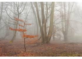 雾,自然,森林,壁纸,图片