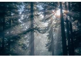 阳光,森林,树,阳光,自然,壁纸,图片