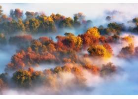 雾,自然,森林,天线,叶子,秋天,树,壁纸,图片
