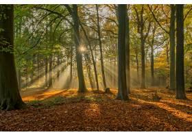 阳光,森林,秋天,灯光,太阳,树,自然,风景,壁纸,图片