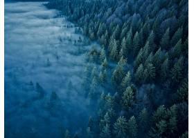 雾,自然,森林,天线,壁纸,图片