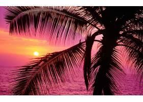 日落,手掌,树,树枝,天空,海洋,太阳,紫色,壁纸,图片