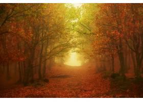 雾,自然,森林,小路,树,叶子,壁纸,图片