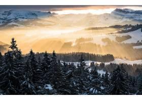 阳光,森林,自然,冬天的,雪,风景,壁纸,图片