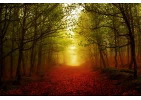 雾,自然,森林,小路,秋天,树,壁纸,图片