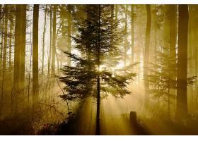 阳光,森林,自然,树,壁纸,图片