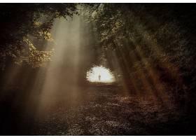 阳光,灯光,雾,Tunel,太阳,离奇的,小路,森林,壁纸,图片