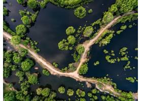 小路,自然,湿地,天线,树,泥土,路,壁纸,图片