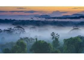 雾,自然,森林,树,地平线,风景,壁纸,图片