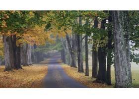 小路,自然,秋天,树,绿树成荫,壁纸,图片