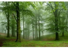 雾,自然,森林,树,壁纸,(1)图片
