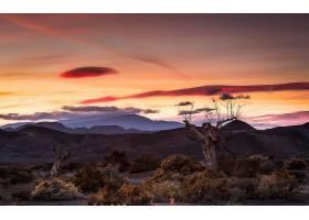 沙漠,自然,树,风景,日落,壁纸,图片