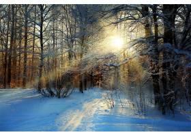 阳光,自然,冬天的,雪,小路,树,森林,壁纸,图片