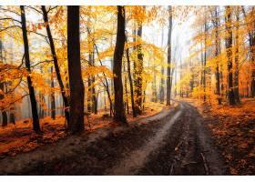 小路,自然,秋天,森林,树,叶子,泥土,路,壁纸,图片