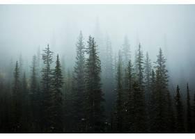 雾,自然,森林,树,壁纸,(4)图片