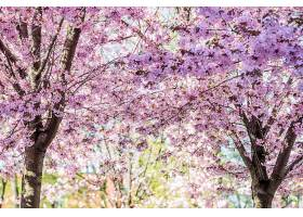 地球,花,花,树,弹簧,自然,快活的,粉红色,花,壁纸,图片
