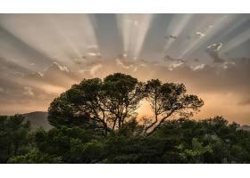 阳光,自然,天空,树,壁纸,(1)图片