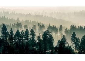 雾,自然,森林,树,壁纸,(6)图片