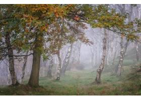 雾,自然,森林,树,小路,壁纸,(1)图片