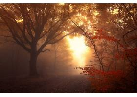 雾,自然,森林,树,小路,壁纸,(2)图片