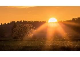 阳光,自然,太阳,树,壁纸,图片