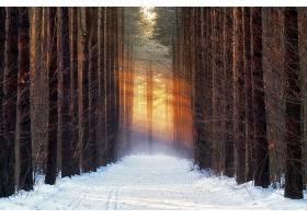 小路,自然,雪,冬天的,阳光,树,绿树成荫,壁纸,图片
