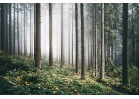 雾,自然,森林,树,小路,壁纸,(3)图片