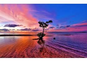 日落,树,天空,粉红色,紫色,蓝色,海洋,地平线,自然,壁纸,图片