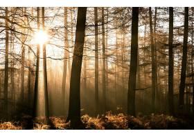 阳光,自然,太阳,森林,树,壁纸,图片