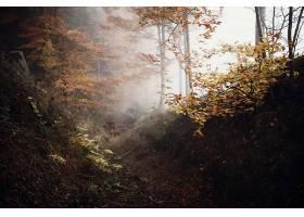 雾,自然,森林,树,小路,壁纸,图片