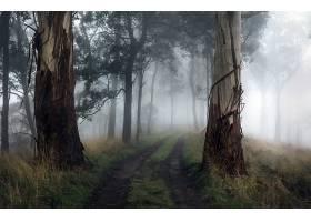 雾,自然,森林,树,泥土,路,壁纸,(1)图片