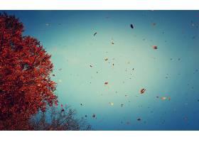 秋天,叶子,蓝色,天空,树,壁纸,图片