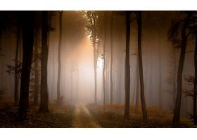 雾,自然,森林,树,泥土,路,壁纸,图片