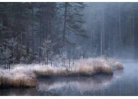森林,河,雾,自然,反射,壁纸,图片