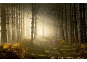 阳光,自然,小路,森林,雾,树,壁纸,图片