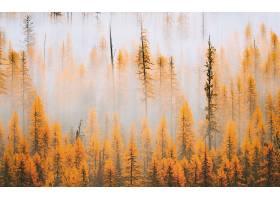 雾,自然,森林,树,秋天,叶子,壁纸,图片